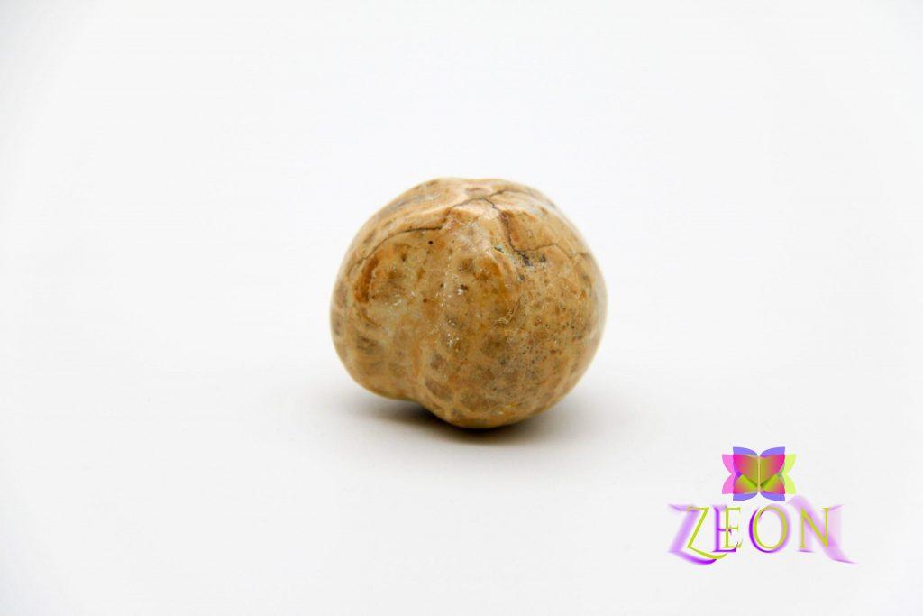 Sea Urchin – Mircaster